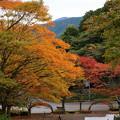 Photos: 姫沙羅公園の秋色