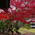 Photos: 晩秋の山寺~地上に舞い降りた秋色