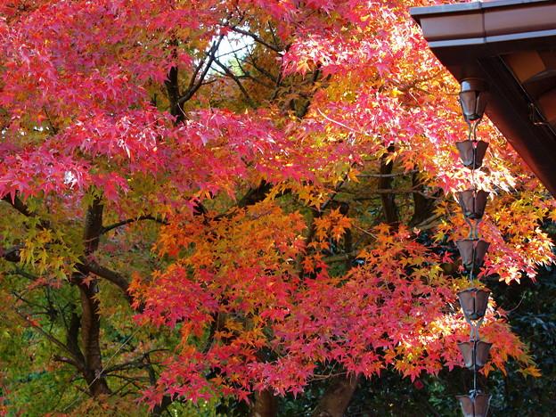 晩秋の虹の郷