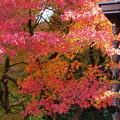 Photos: 晩秋の虹の郷