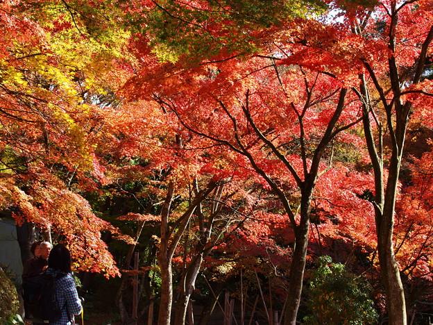 秋色を愛でる