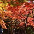 Photos: 秋色を愛でる