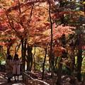 Photos: 晩秋を愛しむ