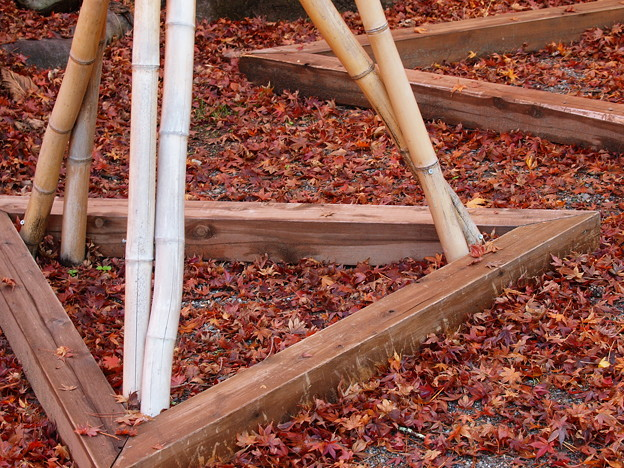地上に舞い降りた紅葉たち