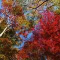 Photos: 色取り取りな秋色