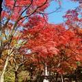 秋を振り返る