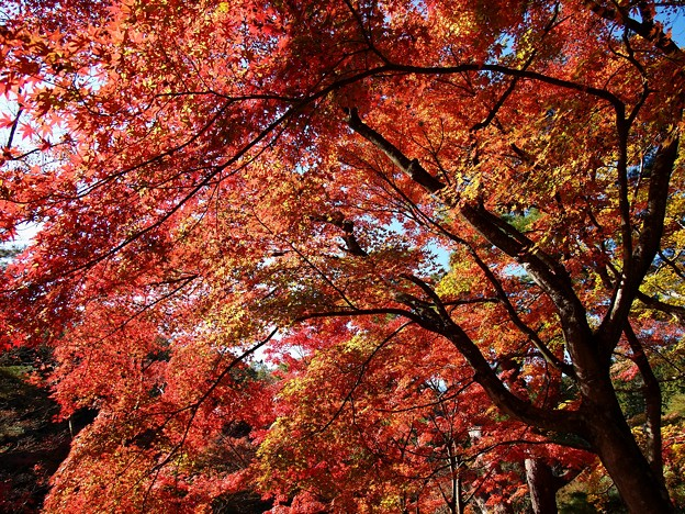 虹の郷の晩秋