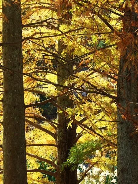 林間にそそぐ晩秋の陽光