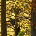 Photos: 林間にそそぐ晩秋の陽光