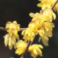 せせらぎにも春の香り