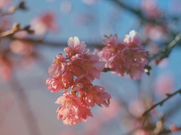 せせらぎ公園の早春 -a