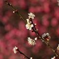 春を告げる