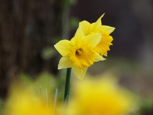 フワッと春色