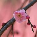 写真: Pink ! pink !! pink !!!