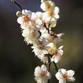 立春の陽光