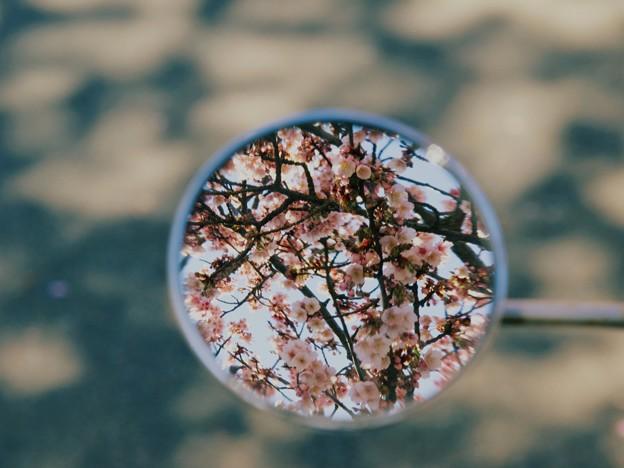 Photos: サイドミラーは春爛漫