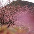 みなみの桜も今が旬♪