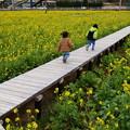 Photos: 菜の花回廊