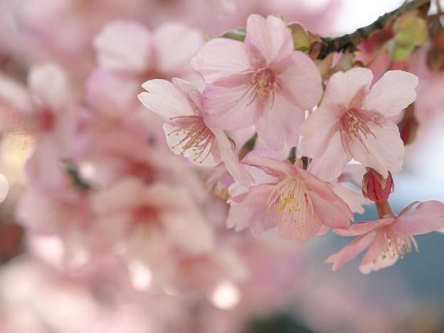 Photos: 春の囁き