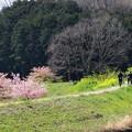 さくら咲く春の情景を試し撮り -a
