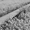 春の香りに包まれて、この歩道を歩むのは…