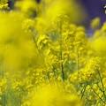 Photos: 春の光に包まれて
