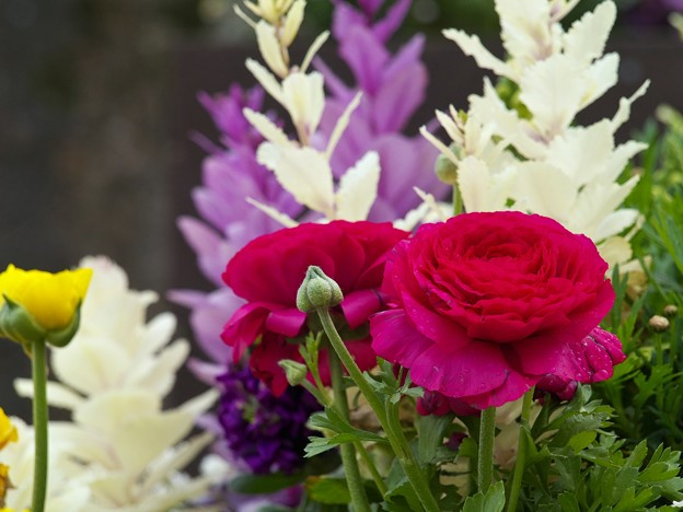 雨上がりの花壇は春の香り