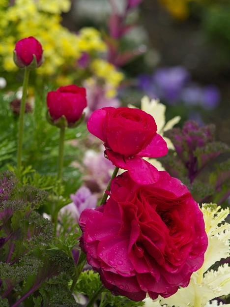春の香り漂う雨上がりの花壇
