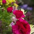 写真: 春の香り漂う雨上がりの花壇