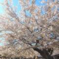 春の陽射しを受けて