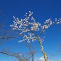 どこまでも碧い空の青