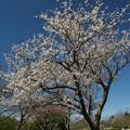 祝・令和♪~どこまでも碧い春の空