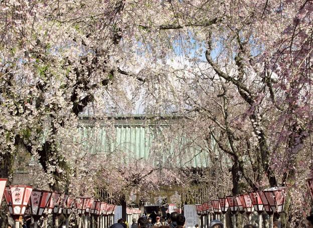 春の日の参道