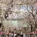 Photos: 春の日の参道
