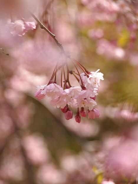 Photos: Spring has come