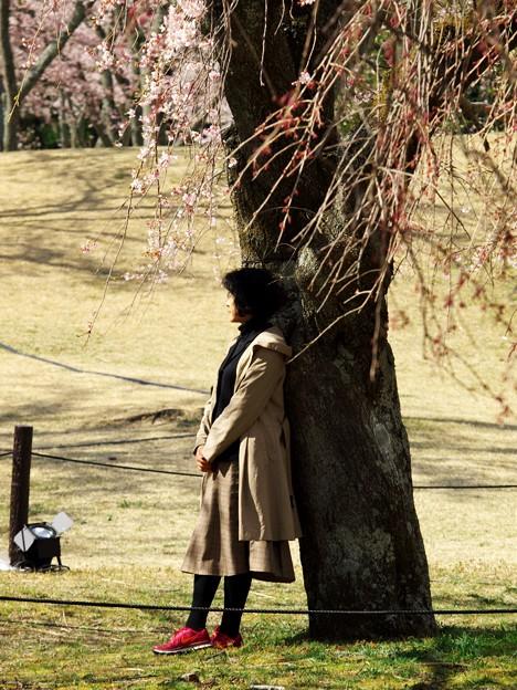 Photos: 桜の木にもたれ