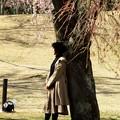 桜の木にもたれ
