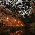 Photos: 神池を覆う夜桜