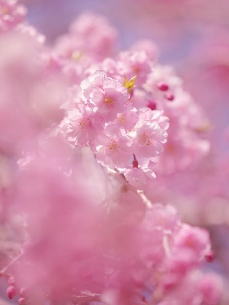 Photos: Pink! Pink!! Pink!!!