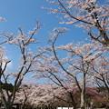 春の青空の下