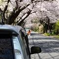 相棒と桜パシャ~