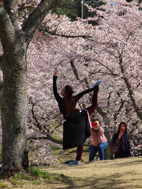 桜の下のバレエダンサー