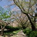 桜散りし葉桜並木