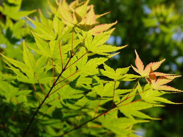 新緑の香り