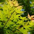 Photos: 新緑の香り