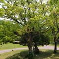 Photos: 大きな樹の下で…