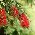紅いブラシ