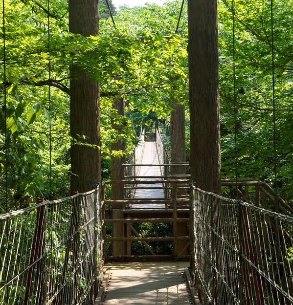 連なる吊橋