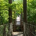 Photos: 連なる吊橋