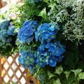 Photos: みしま花の街フェア